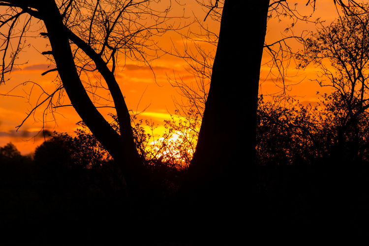 Sundown silhouettes Afternoon Bare Tree Beauty In Nature Branch Branches And Sky Evening Forest Growth Nature No People Orange Color Outdoors Scenics Silhouette Silhouette Silhouettes Sky Sun Sundown Sunset Tranquil Scene Tranquility Tree Tree Trunk