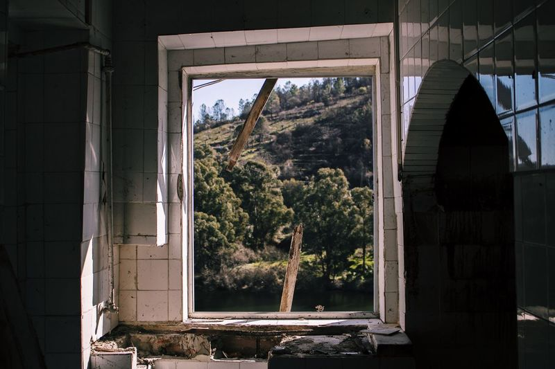 Trees seen through window of abandoned house