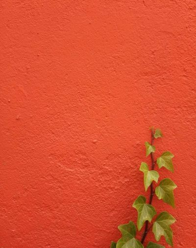 Copy Space Leaf Backgrounds Red Textured  Full Frame Copy Space Close-up Plant Built Structure Architecture Creeper Plant Growing