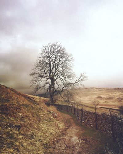Lonely Tree Shootermag Landscape_Collection Exklusive_shot Exploretocreate Lovegreatbritain Stayandwander Liveauthentic Livefolk Lakedistrict Tree_collection  Shootermag_uk United Kingdom EyeEm Nature Lover My Favorite Photo Photooftheday Mobilephotography IPhoneography EyeEm Best Shots
