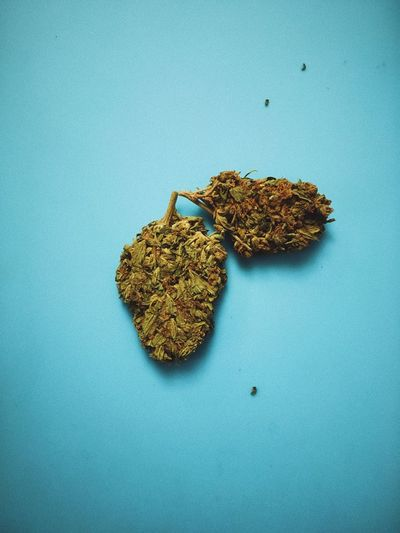 Buds Cannabis Colors Odessa,Ukraine Plant Plants Poster Poster Art Wall Paper Backgrounds Blue Cannabis Plant Close-up Color Colored Background Day Indoors  Marihuana Marijuana - Herbal Cannabis No People Odessa Posters Studio Shot Wallpaper White Background