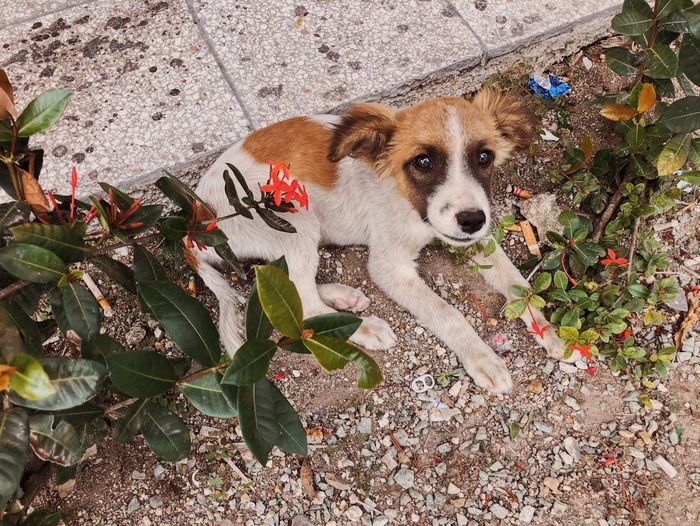cute dog One Animal Mammal Dog Canine Domestic Animals Pets Animal Themes High Angle View Domestic No People Portrait Animal Vertebrate Looking At Camera Day Nature Outdoors Sunlight Plant Plant Part