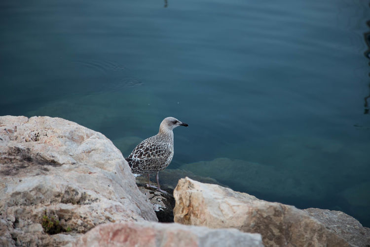 Bird looking away while standing on rock