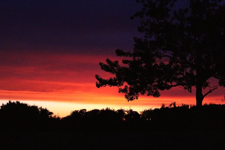 Morgen Röte Silhouette Beauty In Nature Nature Orange Color Sky Outdoors Landscape Idyllic No People Morning Light Morning Sky Baum Morning Walk Sunlight Sunshine Shadow