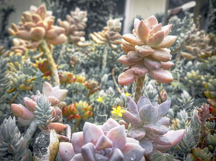 Beauty In Nature Close-up Depth Of Field No People Rain Drops Succulent Garden Succulent Plants