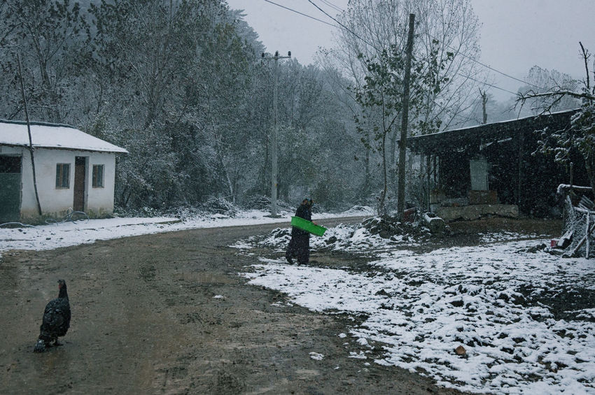 Snowy Village Life Animal Themes Animal Wildlife Animals In The Wild Bird Building Exterior Built Structure Cold Temperature Landscape Mammal Muddy Puddles Muddy Road Nature Outdoors Real People Snowing Snowy Sünnet Sünnetköy Trees Turkey Turkeyphotooftheday View Village Life Winter