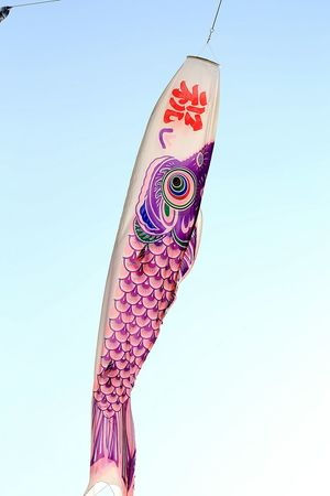 Koinobori Walking Around Relaxing Japan Photography 鯉のぼり Relaxing Sky Park Japanese Culture Wind Check This Out