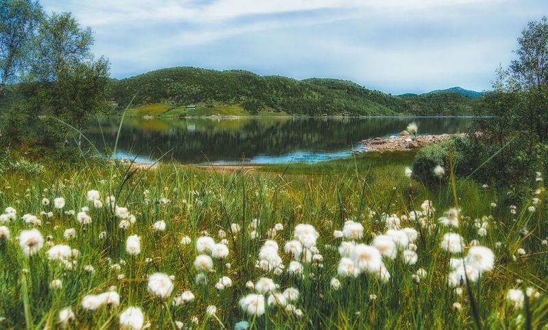 Beautiful norway Norway Travelling Through Norway Landscape Landscape_Collection Landscape_photography EyeEm Nature Lover EyeEm Gallery