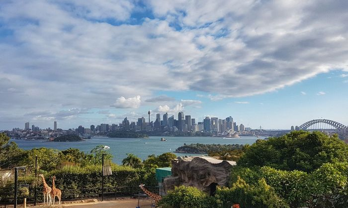 View from Taronga Zoo on City, Sydney Opera Housa and Harbour Bridge, Sydney, Australia #EyeEmNewHere #likeforlike #likemyphoto #qlikemyphotos #like4like #likemypic #likeback #ilikeback #10likes #50likes #100likes #20likes #likere #eyembestshot #EyeEmSelects #eyeemphotography #EyeEm Nature Lover #eye4photography # Photooftheday #gettyimage #Australia #sydney #sydneyoperahouse #HarbourBridge #nsw #zoo #tarongazoo #giraffe #eyembestshot #Eyemselected #WorldGeo Downtown District City Life Sky Architecture Bridge - Man Made Structure