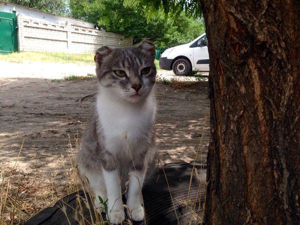 Cat♡ Cats Cat Homeless Cats