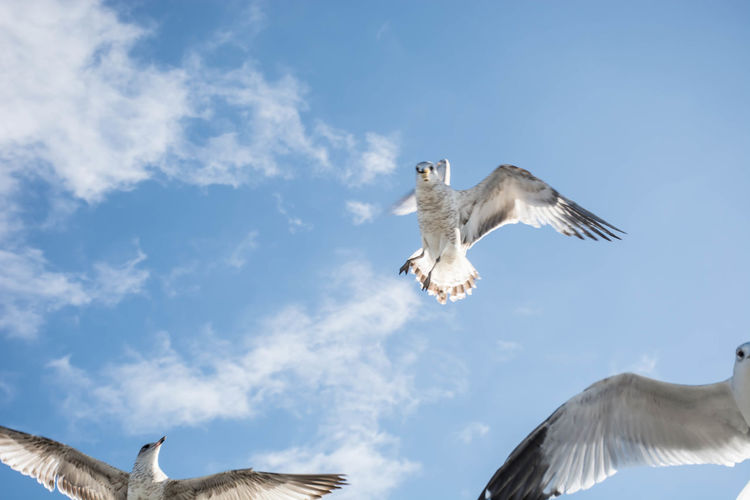 Animal Themes Animal Wildlife Animals In The Wild Beauty In Nature Bird Chesapeake Bay Cufotos Day Flying Low Angle View Maryland Mid-air Nature Nikon Nikonphotography No People One Animal Outdoors Seagull Seagulls Sky Spread Wings
