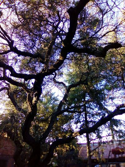 Comonfort Guanajuato Tree Nature Day Sky No People Classic Photography My Day <3 LOL!