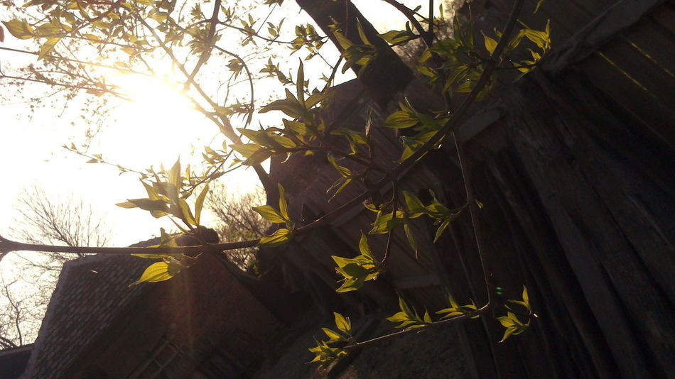 Код бабе и деде у Азањи :) At grandparents Relaxing My Village Taking Photos Nature #sunset First Eyeem Photo