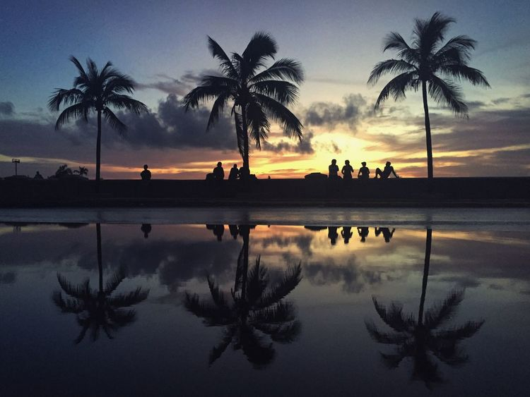 Lost In The Landscape Palm Tree Silhouette Tree Reflection Water Swimming Pool Sky Sunset Tranquility Men Real People Nature Outdoors Beauty In Nature Vacations Day People Cienfuegos, Cuba Cuba KuBa Perspectives On Nature