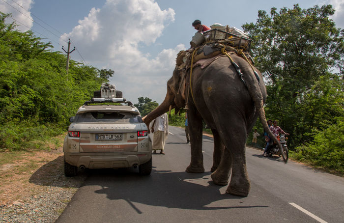 Travel Travel Photography Adventure Car Day Domestic Animals Elephant Full Length Indian Elephant Mammal Men Nature One Animal Outdoors People Real People Riding Road Sky Transportation Travel Destinations Tree Two People Summer Road Tripping