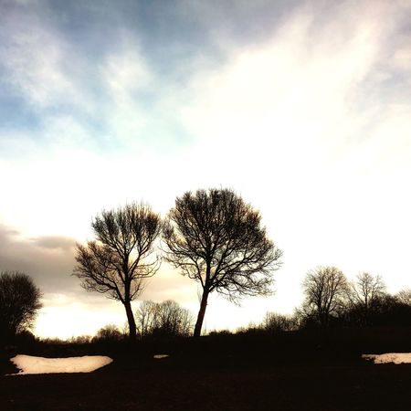 EyeEmNewHere Two Tree Beauty In Nature Landscape Silhouette Sunbeam