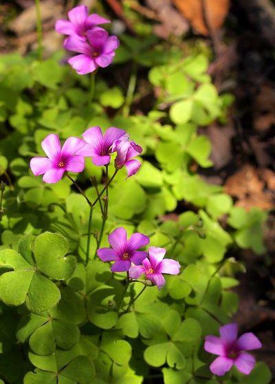 Tokyo Flower