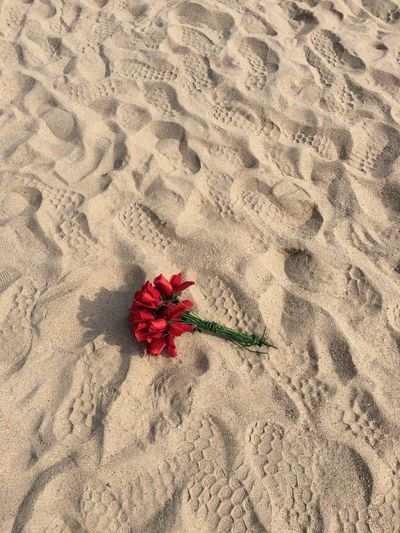 High angle view of red flower on sand