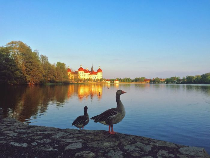 Schloss Moritzburg  Castle Blue Sky Water Bird An Eye For Travel