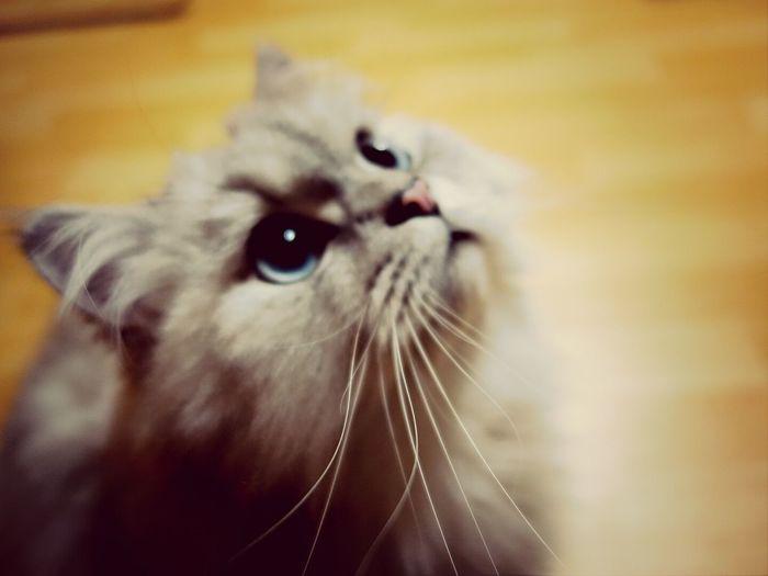 고양이 사진찍기는 정말 어렵군.. Cat Pet Photography  Habee