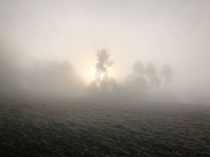 2nd Jan 20 Fog