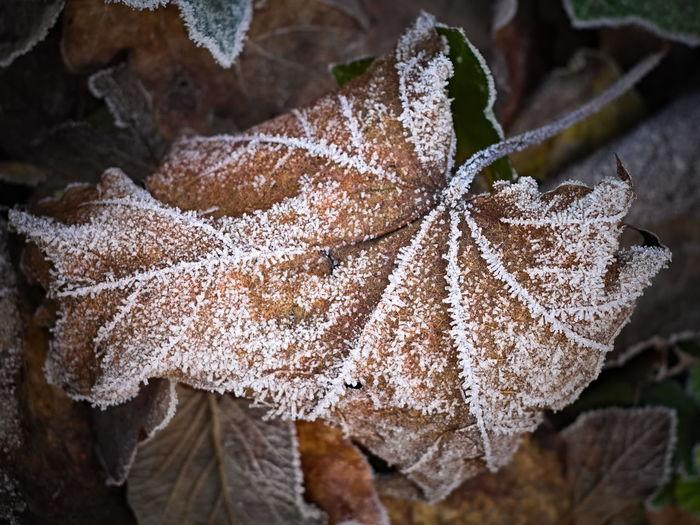 a frozen leaf