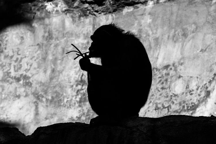 Silhouette monkey sitting on rock
