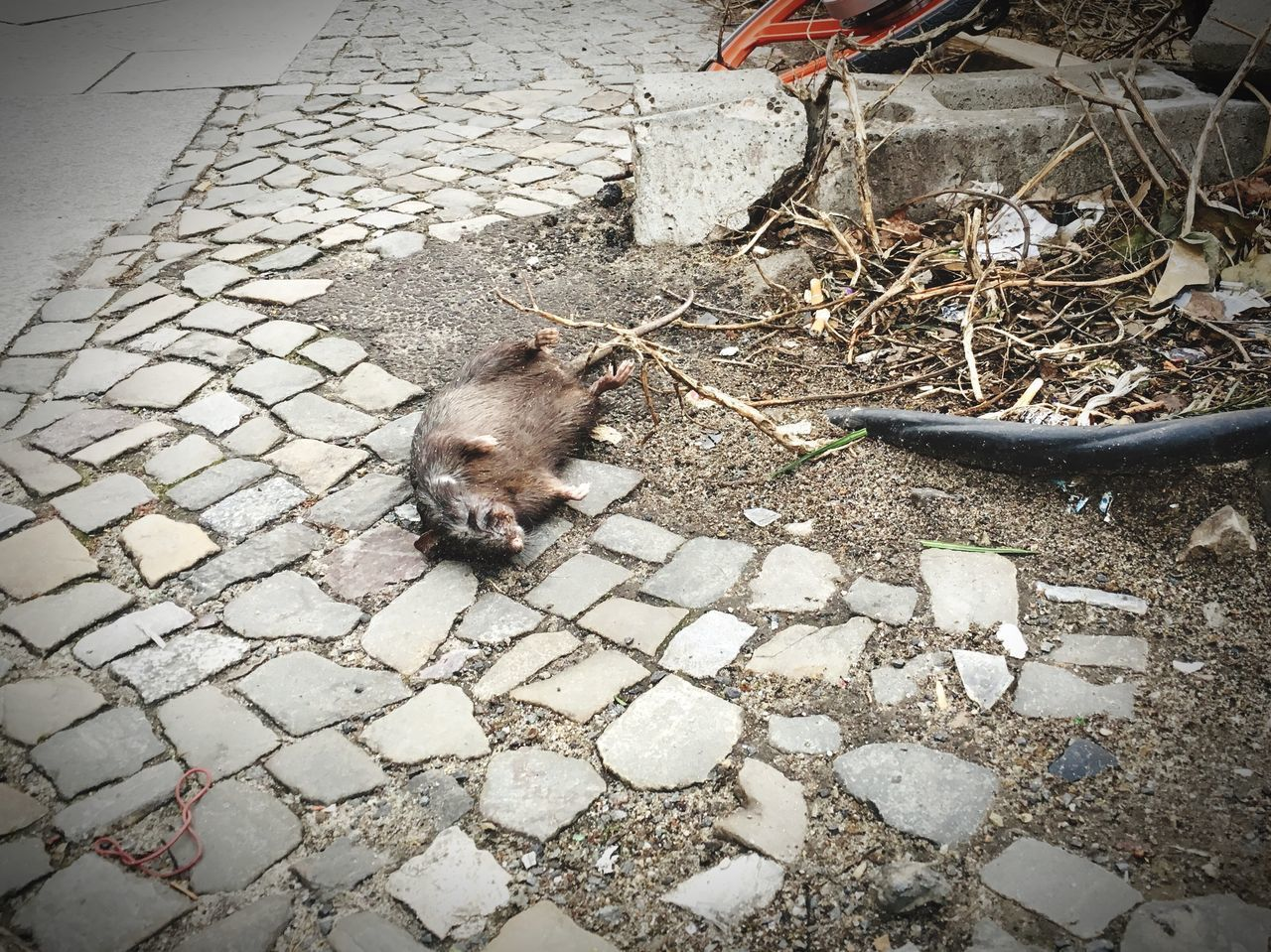 HIGH ANGLE VIEW OF CAT ON FOOTPATH