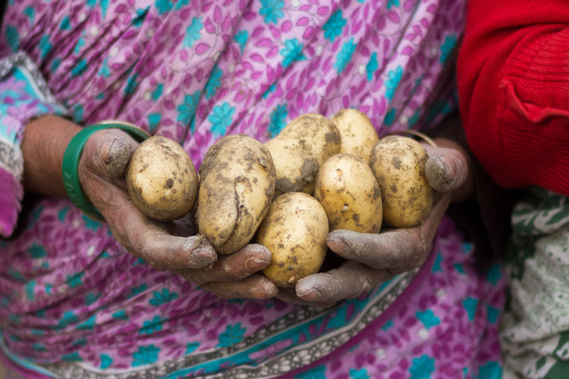 Midsection of woman holding potatoes