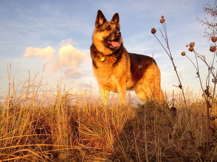 Dog standing on field against the sky