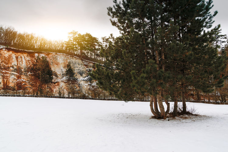 Tree Snow Winter Plant Cold Temperature Nature Beauty In Nature Tranquility Tranquil Scene Sky No People Land Scenics - Nature Day Non-urban Scene Growth Landscape Covering Environment Outdoors Pine Tree Snowing Coniferous Tree