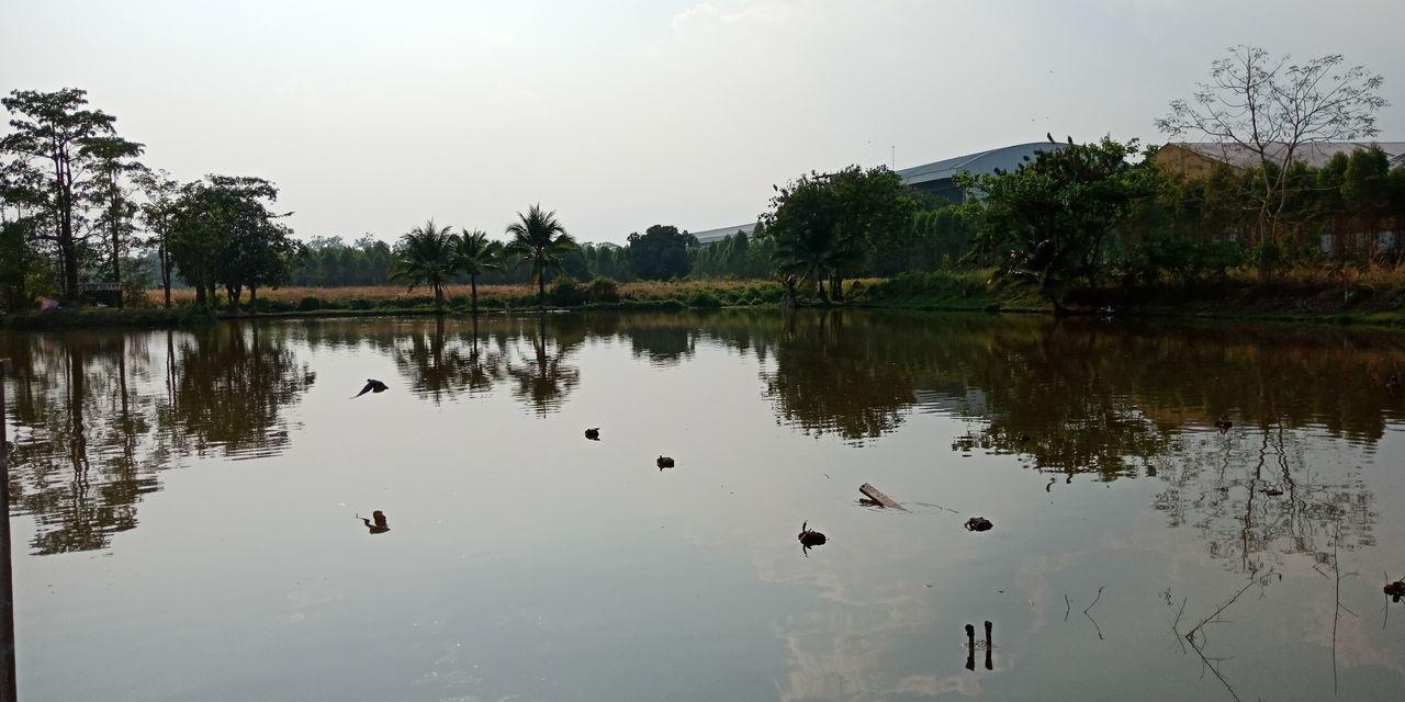 Bird Water Tree City Lake Beauty Reflection Sky