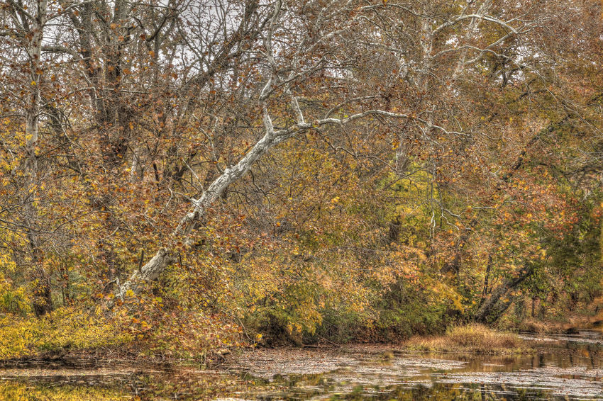 Dead Tree Still Standinf Beside a Creek in Autumn - HDR Autumn Bare Tree Change Creek Day Fall Colors Foliage HDR Landscape,. Nature No People Outdoors Scenery Stream Tranquil Scene Tranquility Tree Tree Trunk