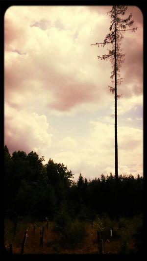 Silhouette Nature alone