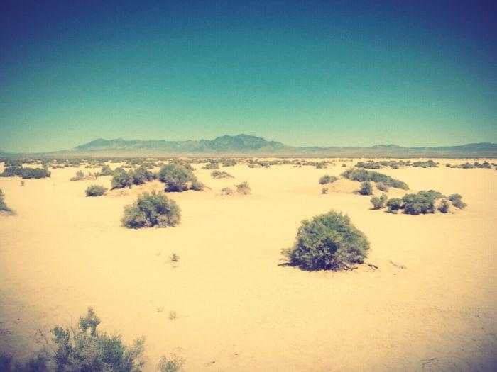 Dry Lake Dry lake bed I explored. :)