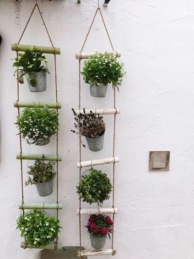 Greatplanters Altea, Spain Cute Decoration