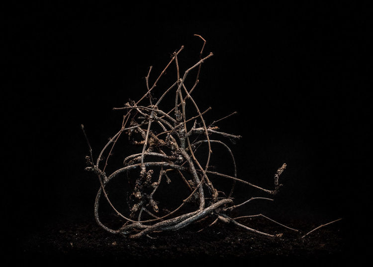 Close-up of bare tree against black background