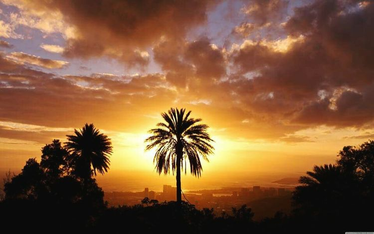 California sunset California Sunset Skyisonfire Palm Trees