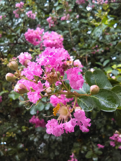 Beautyinnature  Pink Flowers R Outdoors Growth Close-up Tree Freshness Flower Head Fragility