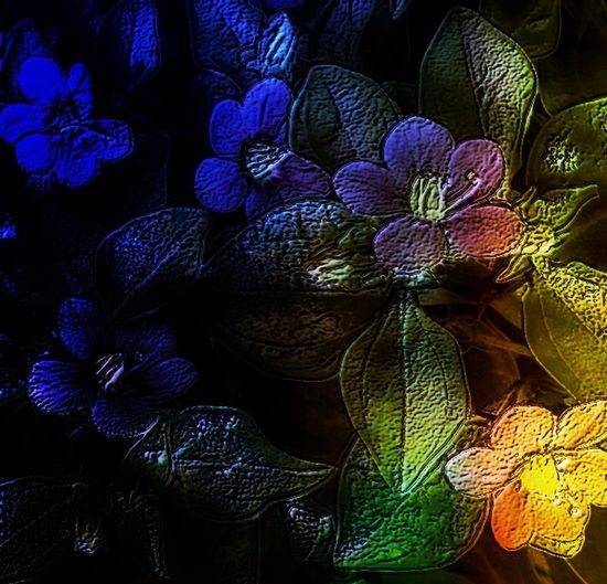 Pixlr PixlrEffects Flower Photography Color Photography Flowers Color First Eyeem Photo