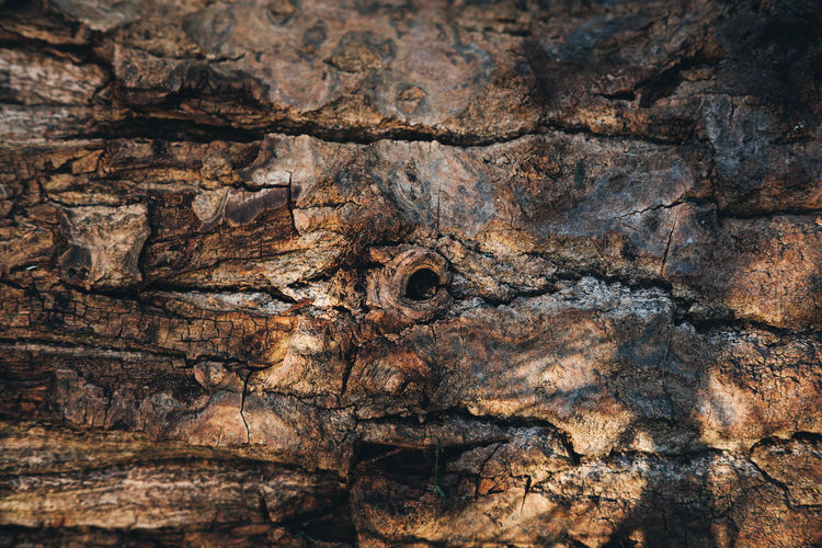 Despite the beautiful bokeh and the silent, fast and mostly accurate AF – my disappointment with the XF35mm F2 lurks in the corners. If they wouldn't be so smudgy, I wouldn't have such a hard time not falling in love. Bark Brown Knot Natural Pattern Outdoors Texture Tree Trunk Weathered Wood Xf35mmf2
