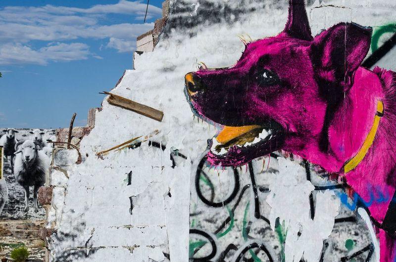 Graffiti Dog Sheep