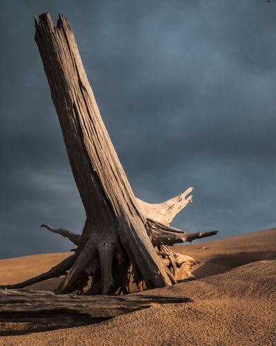 Dead Tree On Sand At Beach Against Sky