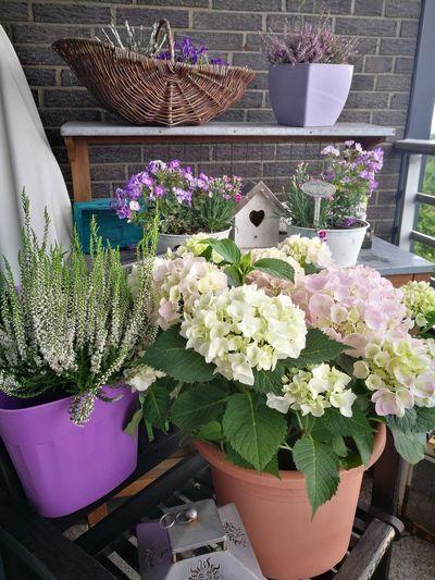 Flower Florist