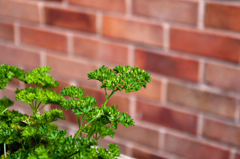 Close-up of plant against brick wall