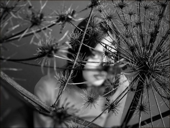 Close-up of dandelion against tree