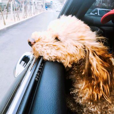 Domestic Mammal Domestic Animals Pets One Animal Animal Transportation