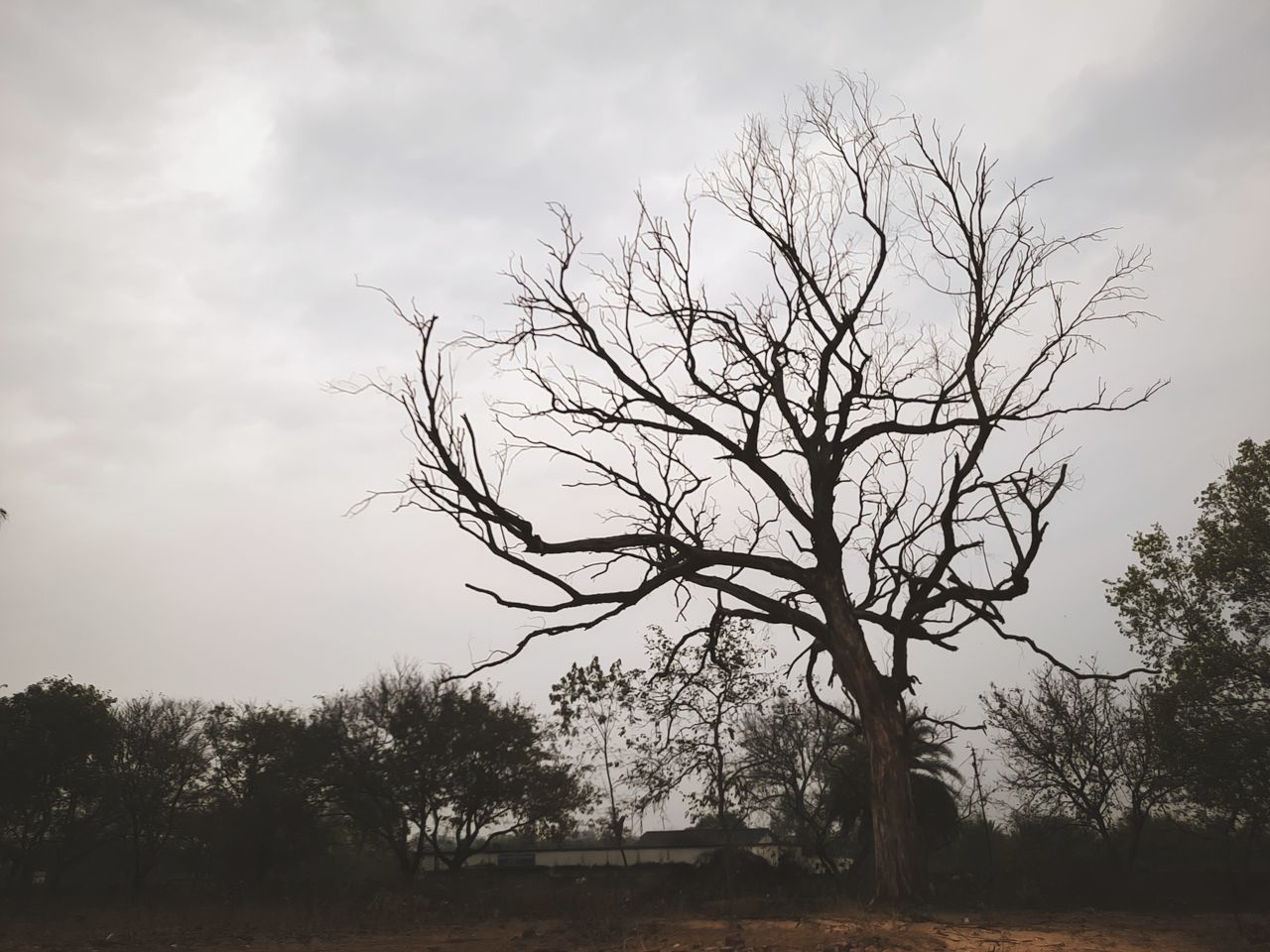 VIEW OF BARE TREES ON FIELD AGAINST SKY