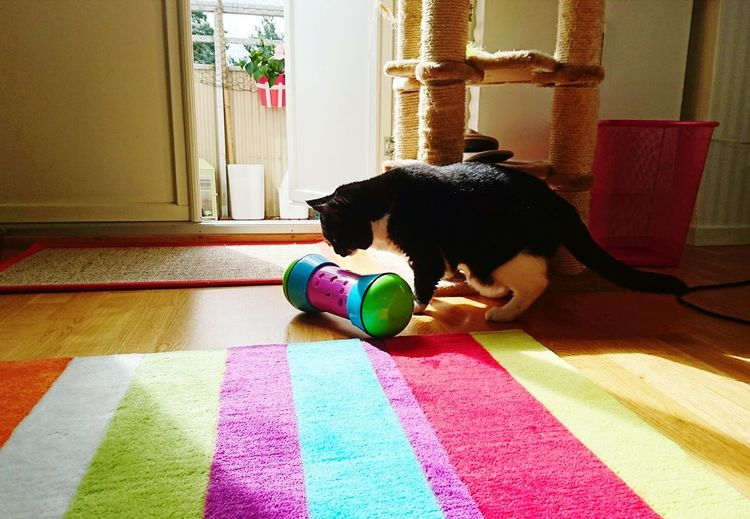 Why, WHY did you put my breakfast in this thing? Oh wait, it's actually quite fun. Cats Breakfast Time Light And Shadow Colour Of Life Snapshots Of Life