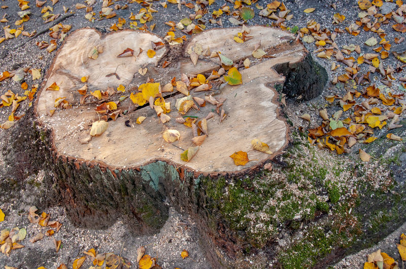 High angle view of lichen on rock